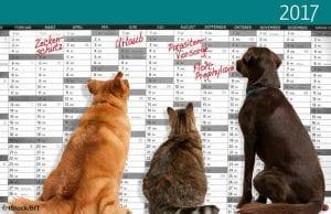 Wichtige Termine im Zusammenhang mit der Gesundheit für Hund und Katze vergisst man nicht, wenn man sie plant und notiert. Foto: iStock/BfT